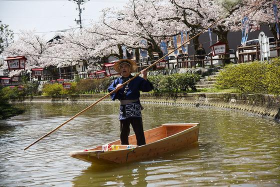 昔ながらの紺地の法被を着て、満開の桜の中で木造和船をこぐ姿、これぞ「日本の伝統美」ですね!